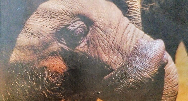 hidden world of elephants