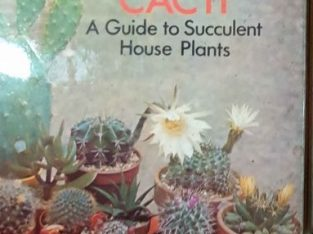 decorative cacti- a guide to house plants