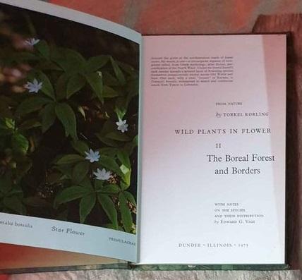 wild plants in flower