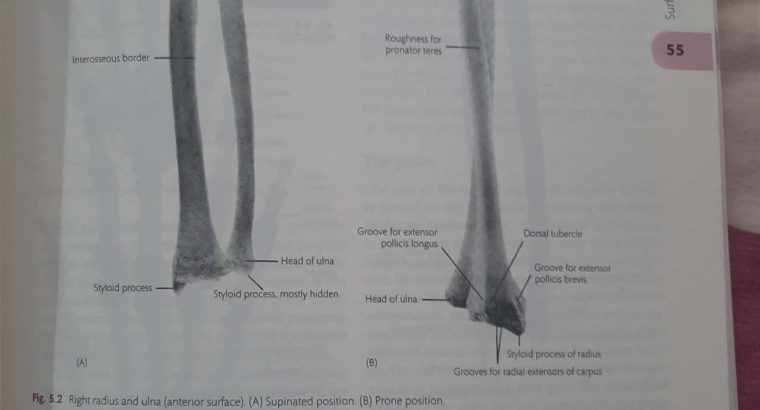 Cunnigham's practical manual of anatomy